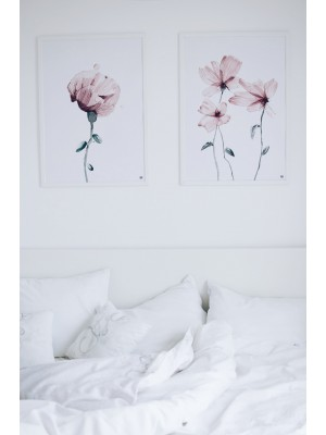 Pink poppy poster no 5
