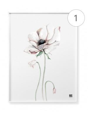 """Anemones trio"" poster set"
