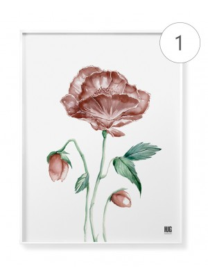 """Red poppy"" poster set"