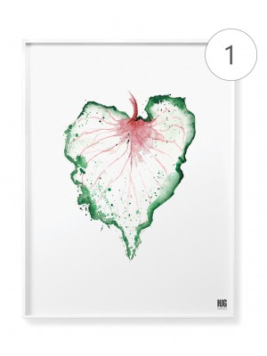 Caladium leaves poster set