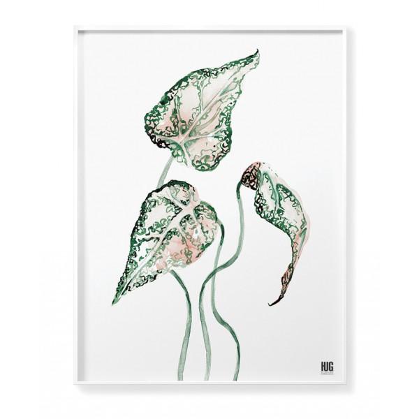 Begonia poster no 2