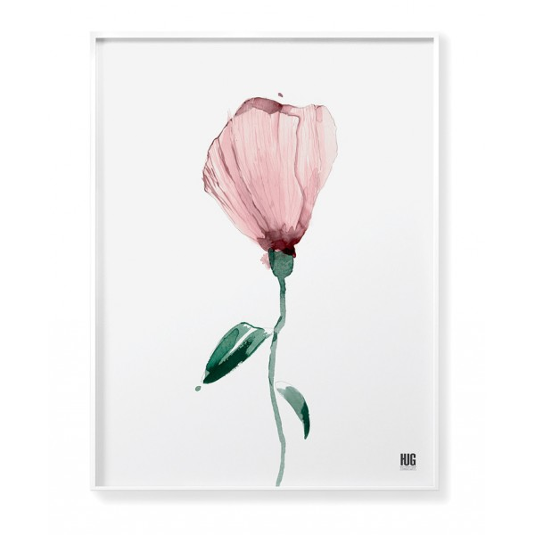 Pink poppy poster no 4