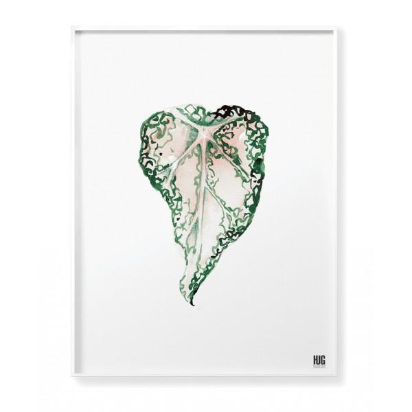 Begonia poster no 1