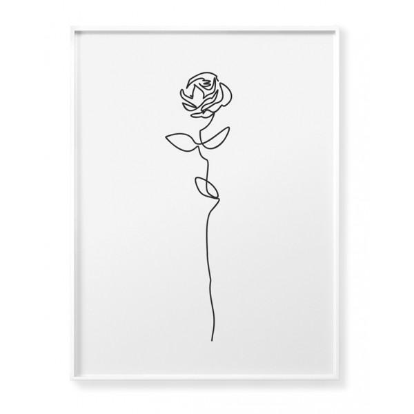 Rose Contour Poster