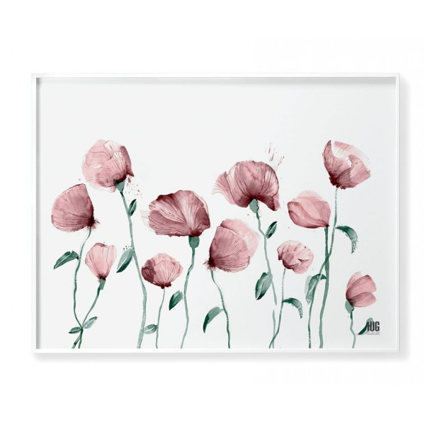 Pink poppy poster no 6