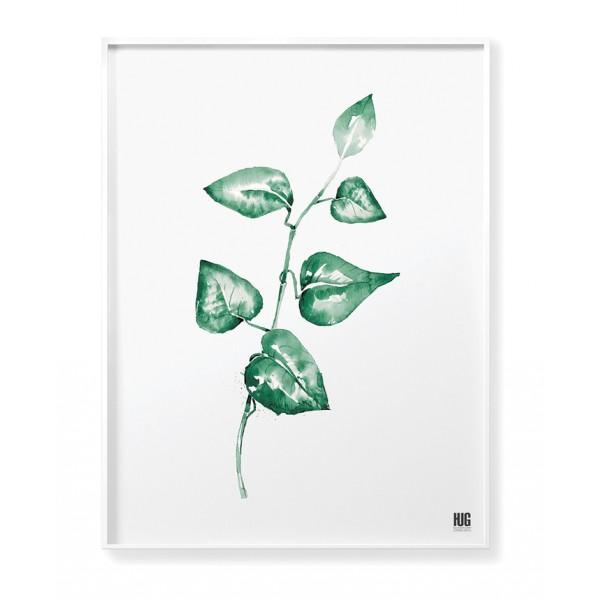 Climbing plant poster no 2