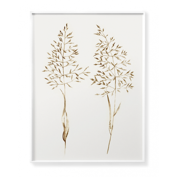 Dried plants poster no 7