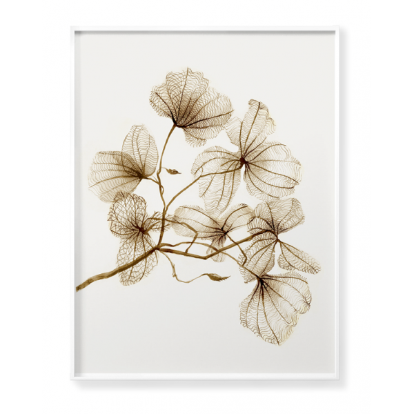 Dried plants poster no 1